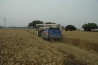 圖片來自:喜願小麥。